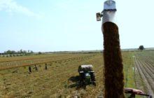 آوایی : برای استفاده بهینه از پتانسیل دزفول به عنوان قطب کشاورزی شمال خوزستان باید تلاش بیشتری شود